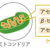 ケトン体は空腹時(絶食時)に合成されエネルギー源として利用される